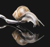 在叉子的葡萄树蜗牛 免版税库存图片
