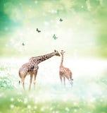 在友谊或爱概念图象的长颈鹿 免版税库存照片
