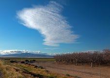 在双突透镜的云彩下的杏仁果树园在倍克斯城加利福尼亚附近的中央加利福尼亚 免版税库存图片