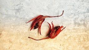 在双重口气背景的干和枯萎的cattleya兰花花 免版税库存照片