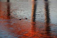 在反射的鸭子 免版税库存图片