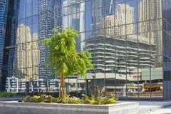 在反射背景的树在被反映的玻璃的 免版税库存照片