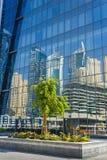 在反射背景的树在被反映的玻璃的 库存图片