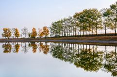 在反映在公开游泳湖的岸的秋季树行 图库摄影