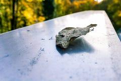 在发光的金属的死的叶子 库存图片