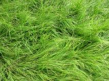 在发烟性山的野草 免版税图库摄影