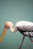 在发现鱼的湖尝试的大鸟 免版税库存图片