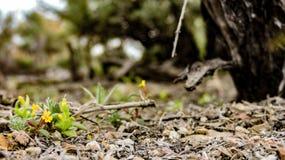 在发芽的第一朵花的一个锋利的焦点在春天 免版税库存照片