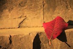 在变动季节的红色叶子 库存照片
