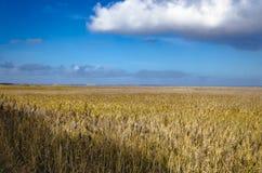 在叙尔特岛海岛上的沿海植被 免版税图库摄影