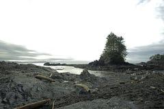 在口岸兰福庐阿的美丽的植物的海滩 使夜间海岛低和平的水坑沙子浪潮湿的温哥华靠岸 库存图片