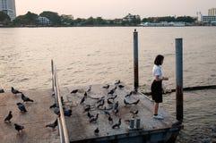 在口岸的女学生哺养的鱼 库存图片