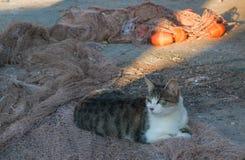 在口岸的猫 免版税库存图片
