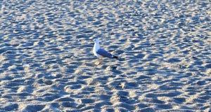 在口岸的码头墙壁的饥饿的海鸥在基尔德国 库存图片