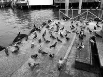 在口岸的鸽子 免版税库存图片