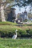 在古典殖民地法国公墓的鸟在新奥尔良,路易斯安那 库存图片