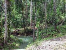 在古晋马来西亚附近的婆罗洲密林2013年 库存图片