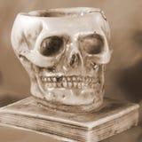 在古老书和橙色背景上的头骨 图库摄影