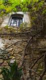 在古老墙壁上的一棵树 免版税库存图片