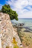 在古老墙壁上的树在海边 免版税库存图片