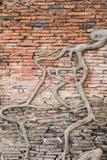 在古老墙壁上的根 库存照片