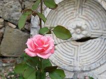 在古老废墟的花 库存照片