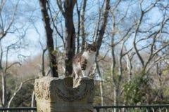 在古老废墟2的离群猫 免版税库存图片