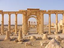在古老扇叶树头榈,叙利亚的废墟 库存图片