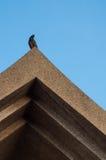 在古老泰国屋顶的鸟 库存照片