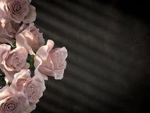在古老混凝土墙装饰背景的白玫瑰 免版税图库摄影