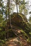 在古老石头和杉树的美好的风景 免版税库存图片