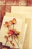 在古老空的照片的干燥玫瑰 背景几何老装饰品纸张葡萄酒 免版税库存照片