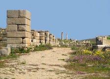 在古老遗骸中的走道在提洛岛,提洛岛海岛,希腊考古学站点  库存图片