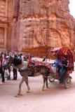 在古老财宝前面的马支架在Petra,约旦 库存图片