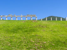 在古老Messini, Messinia,伯罗奔尼撒,希腊的寺庙废墟 免版税图库摄影