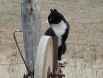 在古色古香的农场设备栖息的黑白猫 免版税库存照片