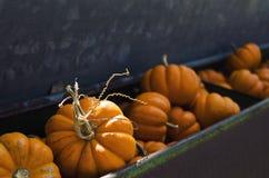 在古色古香的容器的秋天橙色微型南瓜在果树园 库存图片