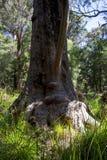 在古代人的谷的一张滑稽的树面孔 免版税库存图片