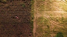 在另外地球领域玉米农厂摘要收获季节的航拍样式 免版税库存图片