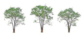 在另外看法的大树 库存照片