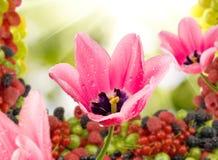 在另外莓果背景的美丽的郁金香 库存图片