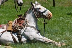 在召集和烙记的一匹被跛行的马 库存图片