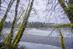 在可可西里山河的美丽的雨林树-叉子-华盛顿 库存图片