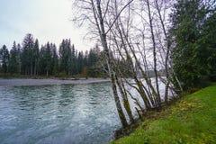 在可可西里山河的美丽的雨林树-叉子-华盛顿 免版税库存照片