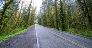 在可可西里山路的蠕动的树在奥林匹克国家公园雨林里-叉子-华盛顿 免版税图库摄影