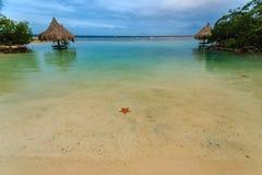 在可爱的潮汐水池的一条红色星鱼在一点法语凯, Roatan,洪都拉斯的一个samll小海湾 库存图片