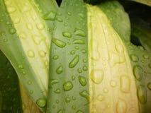 在可爱的雨以后 库存图片