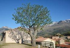 在可西嘉岛中间的山村Casamaccioli 免版税库存图片