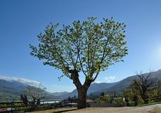 在可西嘉岛中间的山村Casamaccioli 库存图片