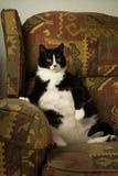 在可躺式椅的肥胖猫 免版税库存图片
